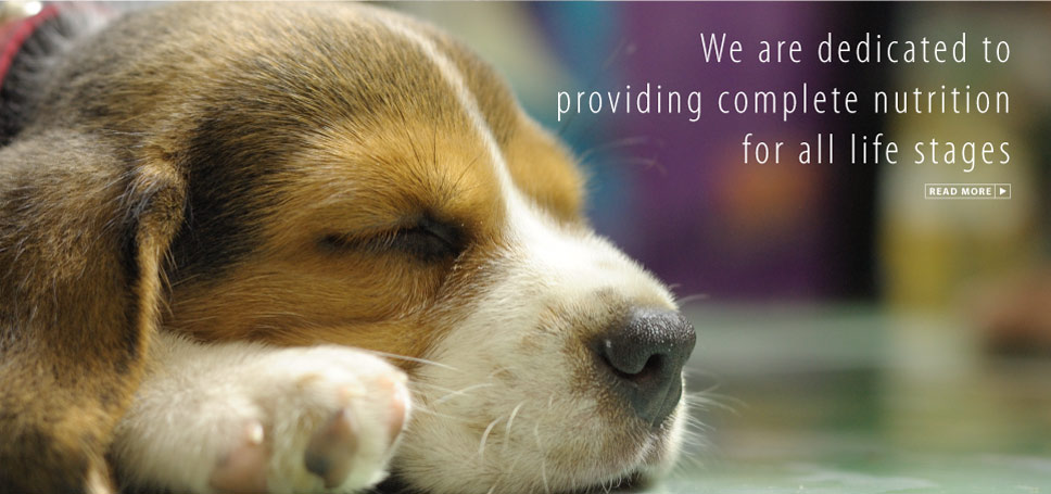 We are dedicated to providing complete nutrition for all life stages.