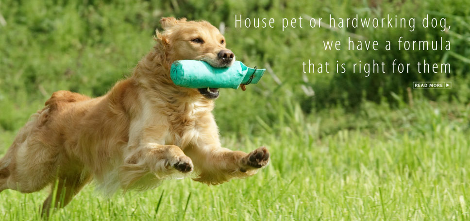 House pet or hardworking dog, we have a formula that is right for them.